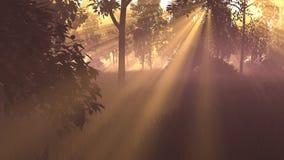 3D grafiek beeld Zonsopgang in het Hout gras, bomen, zon Stock Foto