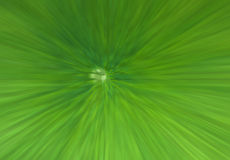 3 D graphics. Green leaf lotus texture. abstract background of lotus leaf. blur Stock Photos