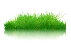 3D grass with reflection Royalty Free Stock Image
