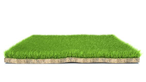 3d grass on white background Royalty Free Stock Images