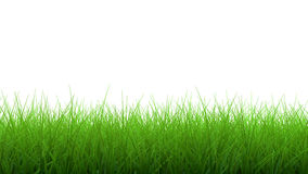 3d Green grass border. 3d render of lush green grass border  on white background Royalty Free Stock Photography