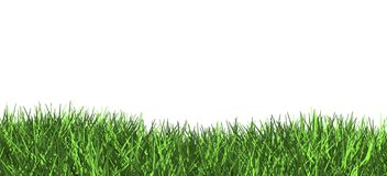 3d green grass illustration. Isolated Stock Photo