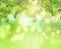 3D green leaves on bokeh lights background. 3D render of green leaves on a sunny bokeh lights background Royalty Free Stock Images