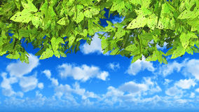 3D green leaves on a cloudy blue sky. 3D render of green leaves on a cloudy blue sky Stock Photo