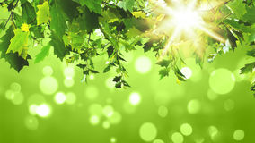 3D green leaves on green background. 3D render of green leaves on a sunny green background Royalty Free Stock Photography