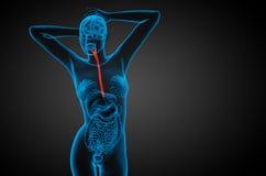 3d ha reso l'illustrazione dell'esofago royalty illustrazione gratis