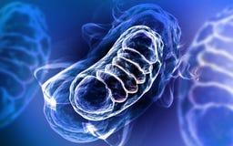 3d ha reso l'illustrazione di Digital dei mitocondri a colori il fondo illustrazione di stock
