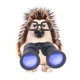 3d Hedgehog looks through binoculars. 3d render of a hedgehog with binoculars Stock Photo