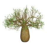 3D het Teruggeven Baobabboom op Wit Stock Afbeelding