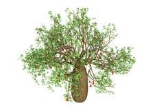 3D het Teruggeven Baobabboom op Wit Stock Fotografie