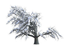 3D het Teruggeven Eiken Boom onder Sneeuw op Wit Stock Afbeelding