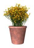3D het Teruggeven Genista Hispanica Bloemen op Wit Stock Afbeelding