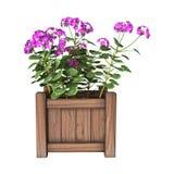 3D het Teruggeven Geraniumplanter op Wit Stock Foto's