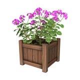 3D het Teruggeven Geraniumplanter op Wit Royalty-vrije Stock Foto's