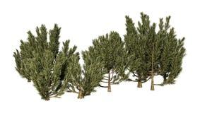 3D het Teruggeven Groene Mulga Bomen op Wit Royalty-vrije Stock Foto's