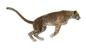3D het Teruggeven Jachtluipaard op Wit Stock Afbeelding