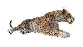 3D het Teruggeven Jachtluipaard op Wit Stock Fotografie