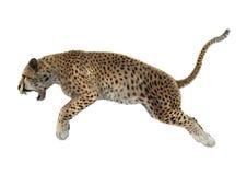 3D het Teruggeven Jachtluipaard op Wit Stock Foto