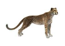 3D het Teruggeven Jachtluipaard op Wit Royalty-vrije Stock Foto's