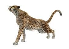 3D het Teruggeven Jachtluipaard op Wit Royalty-vrije Stock Fotografie