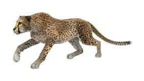 3D het Teruggeven Jachtluipaard op Wit Stock Afbeeldingen