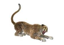 3D het Teruggeven Jachtluipaard op Wit Stock Foto's