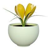 3D het Teruggeven Krokusbloemen op Wit Royalty-vrije Stock Afbeeldingen