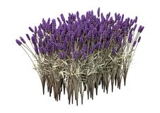 3D het Teruggeven Lavendelbloemen op Wit Stock Afbeeldingen