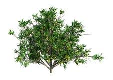 3D het Teruggeven Rododendron op Wit Royalty-vrije Stock Afbeelding