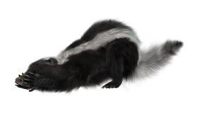 3D het Teruggeven Stinkdier op Wit stock afbeeldingen
