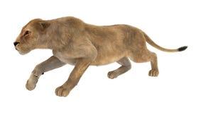 3D het Teruggeven Vrouwelijke Leeuw op Wit Stock Afbeelding