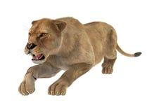 3D het Teruggeven Vrouwelijke Leeuw op Wit Royalty-vrije Stock Afbeelding