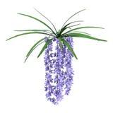 3D het Teruggeven Wilde Orchideebloemen op Wit Royalty-vrije Stock Foto's