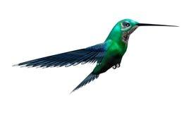 3D het Teruggeven Zoemende Vogel op Wit Royalty-vrije Stock Foto