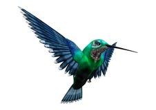 3D het Teruggeven Zoemende Vogel op Wit Stock Afbeeldingen