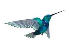 3D het Teruggeven Zoemende Vogel op Wit Stock Foto