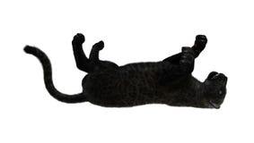 3D het Teruggeven Zwarte Panter op Wit Royalty-vrije Stock Afbeeldingen