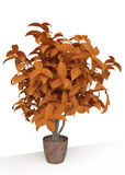 3D Houseplant. Looking like Autumn Tree Stock Images
