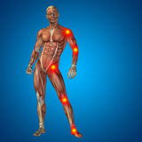 3D human man pain anatomy on blue background Royalty Free Stock Image