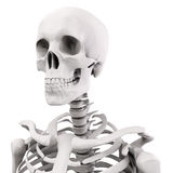 3d human skeleton royalty free illustration