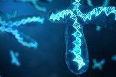 3D illustratie x-Chromosomen met DNA die de genetische code dragen Geneticaconcept, geneeskundeconcept Genetische toekomst, vector illustratie