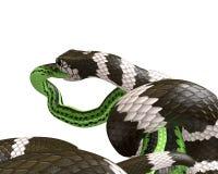 3D Illustratie van een Koning Snake Swallowing van Californië een Groene Slang Stock Foto's