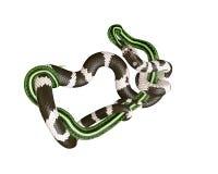 3D Illustratie van een Koning Snake Swallowing van Californië een Groene Slang Royalty-vrije Stock Foto