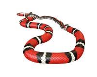 3D Illustratie van een Koning Snake Swallowing van Californië een Zwarte Slang stock illustratie