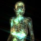 3D Illustratie van een menselijke Anatomie royalty-vrije illustratie