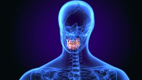 3d illustratie van Menselijke tandanatomie stock illustratie