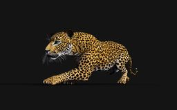 3d Illustratieluipaard, Panthera Pardus, Tijger stock illustratie