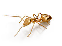 3D illustration of ant. 3D rendering golden ant on a white background Royalty Free Stock Photography