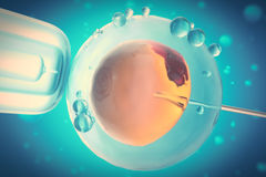 3D Illustration of artificial insemination or in-vitro fertilization of an egg cell,ovum or zygote, Concept, scientific Royalty Free Stock Photo