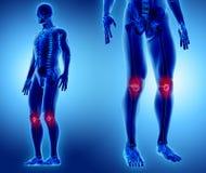 3D illustration av knäskålen, medicinskt begrepp Royaltyfri Fotografi
